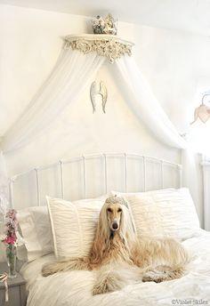 ci può essere un tipo di cane più adatto di lui su questo letto?