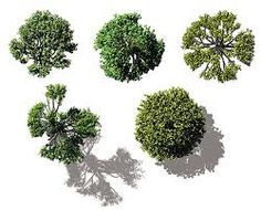 Google Afbeeldingen resultaat voor http://www.doschdesign.com/images2/VI-BE-Trees.jpg