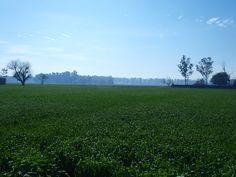 Green fields in Punjab Punjabi Culture, Rural India, Mughal Empire, Past Present Future, Green Fields, Amritsar, Future Travel, Hinduism, Incredible India
