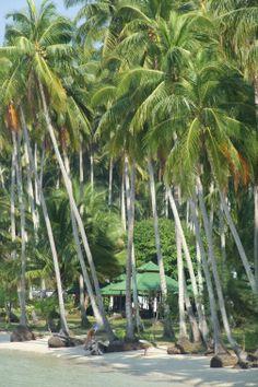 Palm Trees of Koh Kut, Thailand