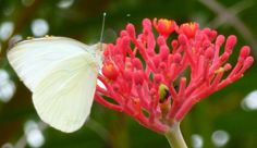 Butterfly on Red Flower, St. Augustine, FL