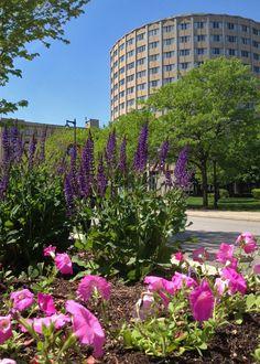 Flowers bloom along Wisconsin Avenue near Marquette University's McCormick Hall.