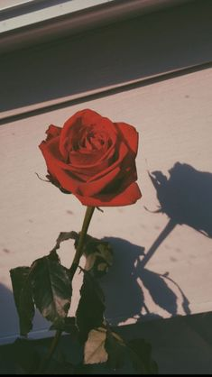 The post appeared first on Blumen ideen. flowers name - Blumen ideen Red Aesthetic Grunge, Aesthetic Roses, Aesthetic Collage, Aesthetic Vintage, Aesthetic Dark, Aesthetic Drawing, Aesthetic Pics, Aesthetic People, Aesthetic Clothes
