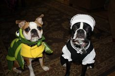 The Turtle and French Maid