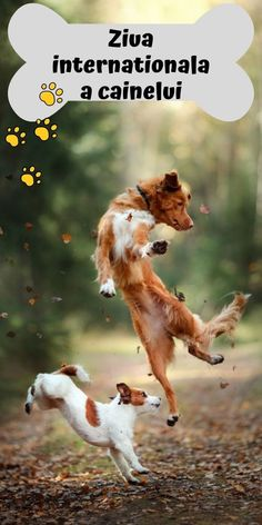 dog training,dog hacks,smart dog,teach your dog,dog learning Me And My Dog, Your Dog, Small Dog Breeds, Small Dogs, American Shepherd, Companion Dog, Purebred Dogs, Lap Dogs, Dog Activities