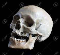 skull photography - Google Search