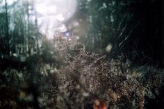 Flare in nature  #canon #film #200asa #agfa #ae1program #filmisnotdead #camera #photography #slr #vintage #35mm #50mm #lens #analog #analogue @canonuk Rob King.