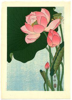 017-Loto florido 1930-Ohara Koson -via-Ukiyu-e-org