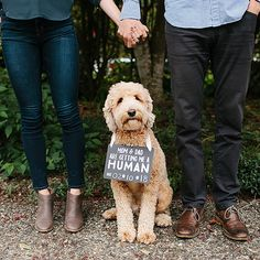 pregnancy announcement with dog Pearhead Baby Announcement, Pet Chalkboard Sign - quot; Pregnancy Announcement Pictures, Cute Baby Announcements, Christmas Baby Announcement, Baby Announcement Dog, Facebook Pregnancy Announcement, Cute Pregnancy Pictures, Pregnancy Reveal Photos, Signs For Mom, Pregnant Dog