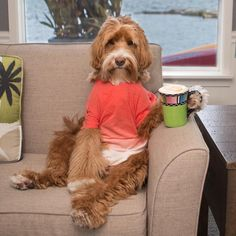 Today is Monday and tomorrow is Election Day. Better make my latte a double. Funny Animal Memes, Cute Funny Animals, Funny Animal Pictures, Cute Baby Animals, Dog Pictures, Funny Dogs, Animals And Pets, Cute Puppies, Dogs And Puppies