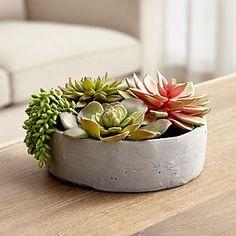 Faux Succulents in Low Round Pot
