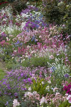 english cottage garden borders - This is what I'm trying to achieve.  I only wish they had identified all the flowers.