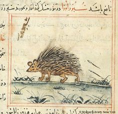Porcupine in left profile; grassy setting | Bestiary | Iran, Maragheh | 1297-1298 or 1299-1300, and 19th century | The Morgan Library & Museum