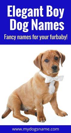 These regal, dignified dog names are great choices for your new pup.