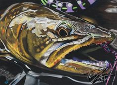 """I Call Bull"" Colored pencil drawing of a Bull Trout by Travis J. Sylvester. Reference photo courtesy of Bryan Huskey."