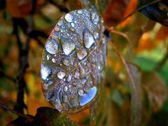 가을이 느껴지는 낙엽 위의 물방울