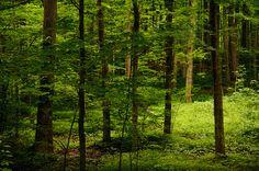 beautiful green by Sam Scholes, via Flickr  June 2010