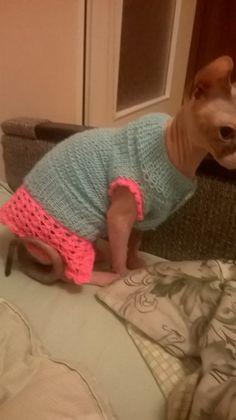 Sweterek dla kota sfinksa