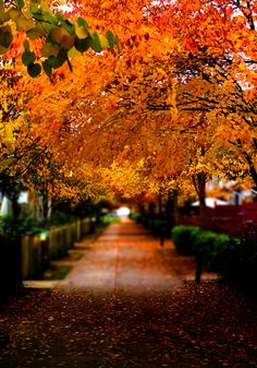Autumn in Vancouver BC by Edwin_Chan