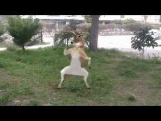 En Komik Hayvan Videoları 2014