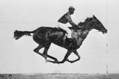 As featured on today's Google search page ...   Eadweard Muybridge was a British photographer ... known for his pioneering work on animal locomotion in 1877 and 1878, which used multiple cameras to capture motion in stop-action photographs ... This animated gif, created in 2006, uses Muybridge's photographs, proving a galloping horse simultaneously lifts all four hooves off the ground.  From Wikipedia
