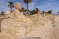 Photo of Sphinx avenue. Luxor Temple, Places Around The World, Around The Worlds, Sphinx, Life List, Chapelle, Prehistoric, Archaeology, Luxor