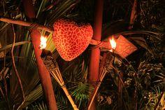 Xplor Fuego!  Amazing time!!!!  February 2015