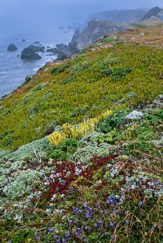 Coastal Wildflowers cover the sea cliffs in Bodega Bay, California, as the fog moves through the area Sonoma County California, Sonoma Coast, California Dreamin', Northern California, Wyoming, Nebraska, Oklahoma, Puerto Rico, Places To Travel