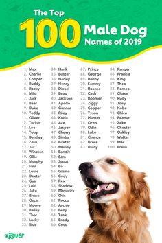 The Top 100 Male Dog Names of 2019 – Hundenamen – edog Top Male Dog Names, Small Dog Names, Cute Puppy Names, Cute Names For Dogs, Best Dog Names Boys, Puppy Names Boy Unique, Cool Pet Names, Cat Names, Golden Retriever Names