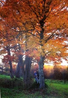 Autumn on our Farm in the Shenandoah Valley of Virginia--Beth Trissel