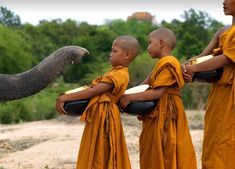 Elephant Welcoming Buddhist Monk Kids By Lisa Kristine