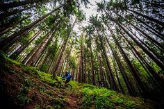 Mountain biking Bike MTB (fb)