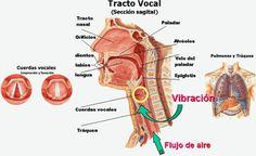 Logoped@ctual: La voz: nuestra carta de presentación
