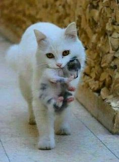 I don't care that your friends are watching. When I tell you to come home, you come home, young man! #funny #kittens #cats