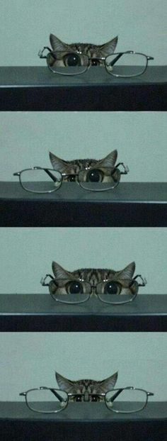 Our glasses are so great, even a cat can pull them off. #LoganEyeCare #LakeMary
