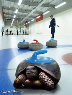 Turtle Curling? This one's for Sarah W.
