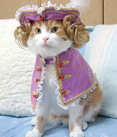 Victorian Prince Cat