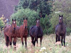 beautiful horses in Uruguay