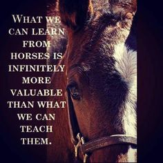 What we can learn from horses is infinitely more valuable than what we can teach them Horse Therapy, Therapy Dogs, Horse Magazine, Horse Feed, Funny Horses, Horse Quotes, Learning Quotes, I Love Girls, Horse Pictures