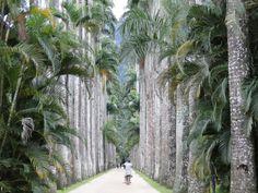 Jardim Botânico do Rio de Janeiro, Brasil