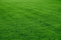 Is your lawn uneven, with dips in the surface? One way to level such areas is by topdressing the low spots and overseeding.