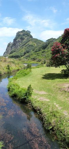 Piha, West Auckland, New Zealand