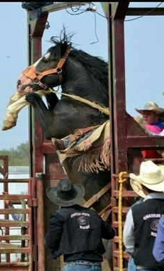 Rodeo Time, Horse Pictures, Cowgirls, Bradley Mountain, Cowboys, Westerns, Horses, Country, World