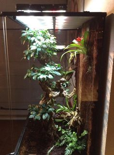 Crested gecko viv by Mike Kuperus