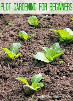 plot gardening for beginners.  Great tips for starting your own garden!