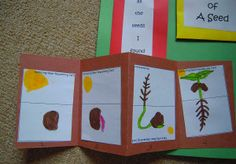 All That's Goood: Seeds, Seeds and more seeds. Parable of the sower mini book & game, too :)