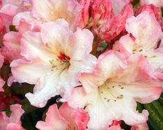 Love Flowers Pink Luiza Nature Drops Beautiful View Flower Photography Wallpapers For Computer Background