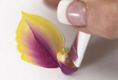 Basic Techniques of One-Stroke Flower Petal Painting | Features | Painters Online: