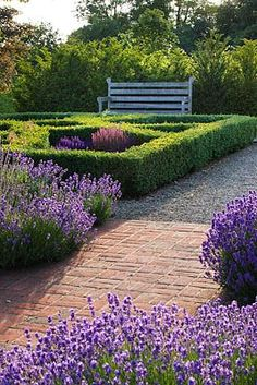 .Love the burst of purple in a well manicured space.  Control and chaos together.