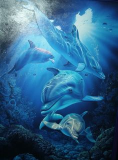 Dolphin Dimension